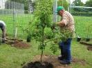Obstbaumpflanzung_1