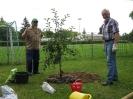 Obstbaumpflanzung_2